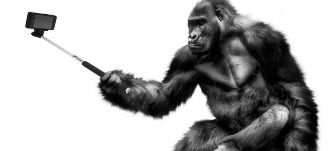 Selfie gorilla