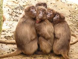 Silly selfie of monkeys