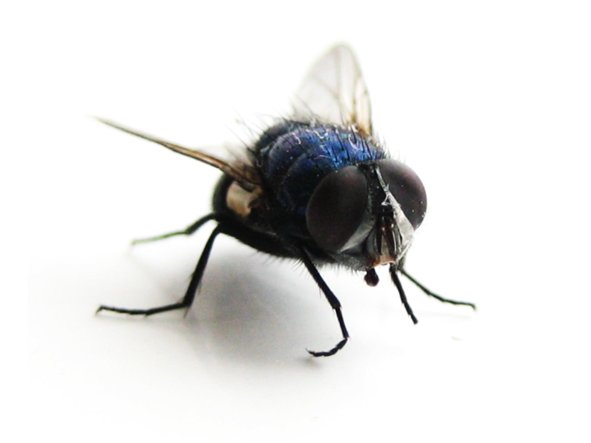fly-1391648