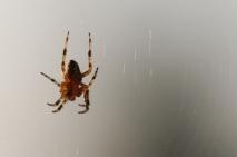spider-1397870
