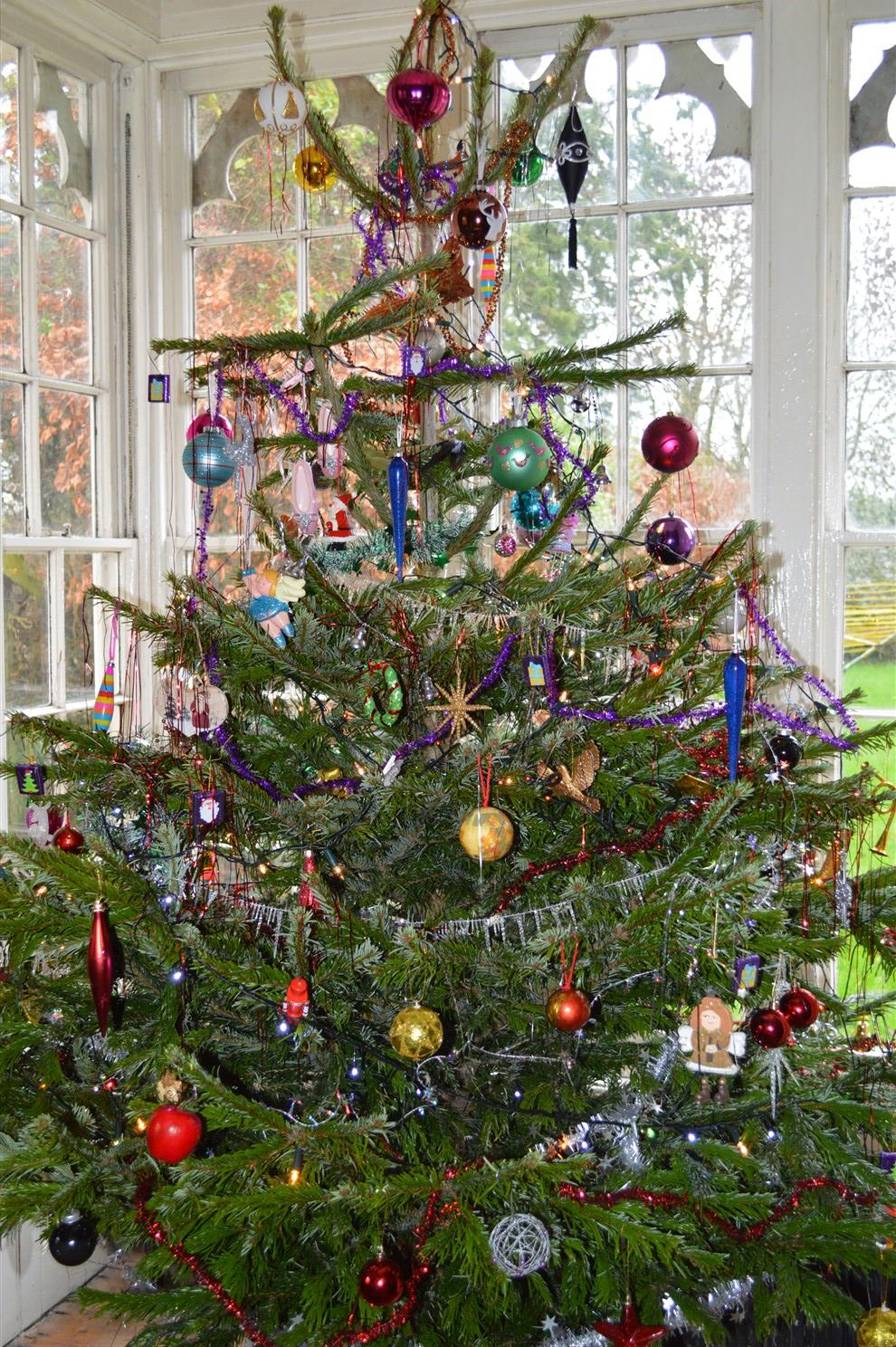 tree-1489-x-990